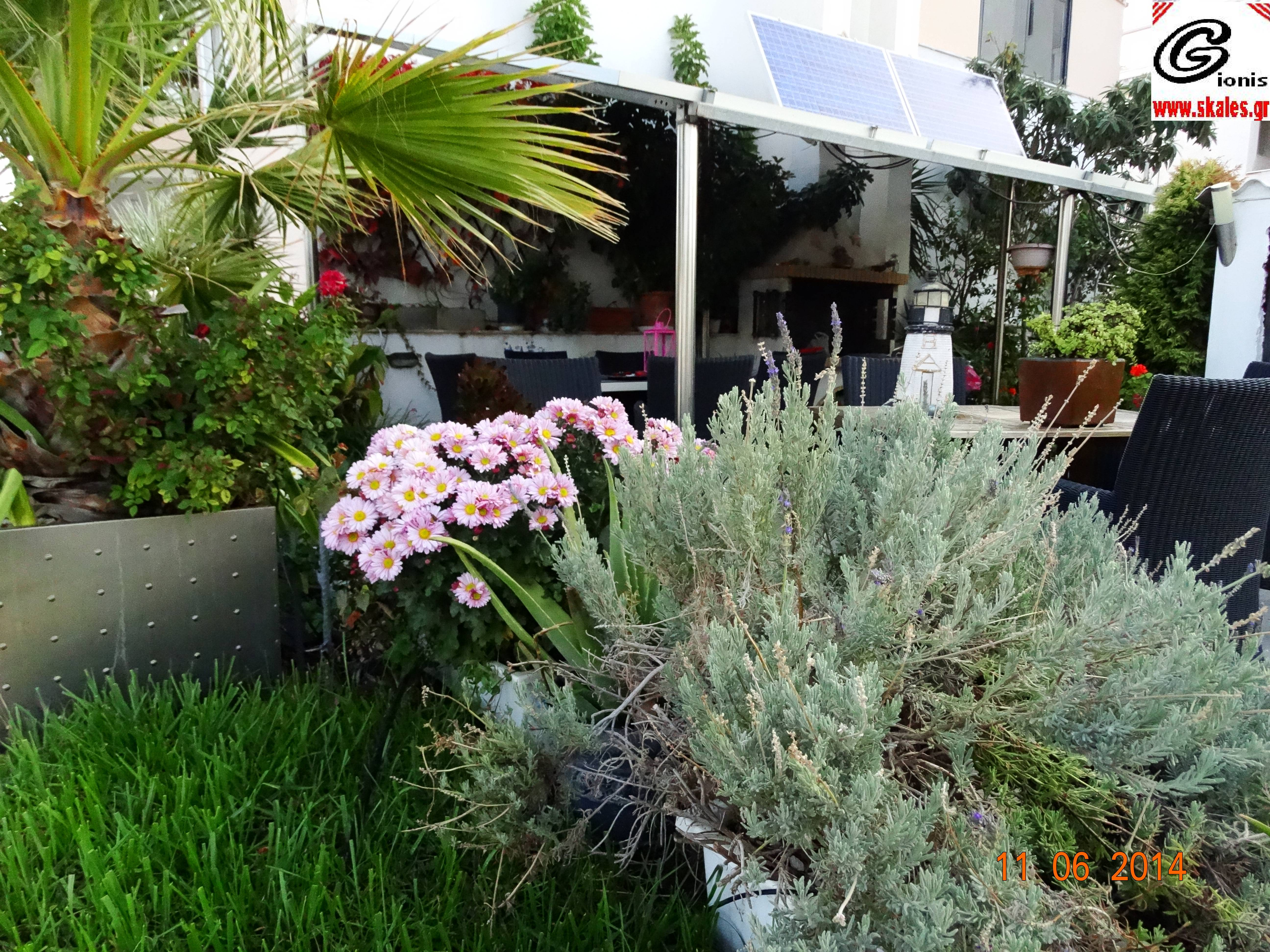 νεκταρινια φυτεμα